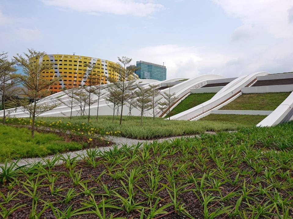 Planter drainage system