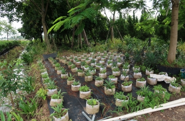 pot plant supply