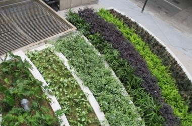 Arboricultual consultancy