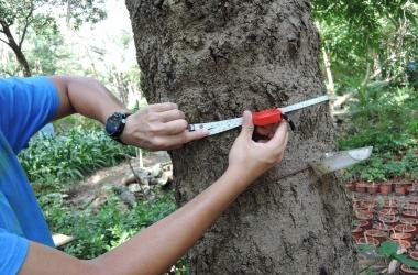 Tree survey _ assessment