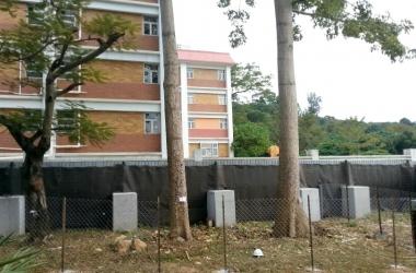 IMG-20131125- tree protection (3)